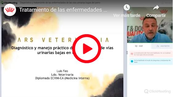 DIAGNÓSTICO Y TRATAMIENTO DE LAS ENFERMEDADES DE LAS VÍAS URINARIAS BAJAS DEL PERRO