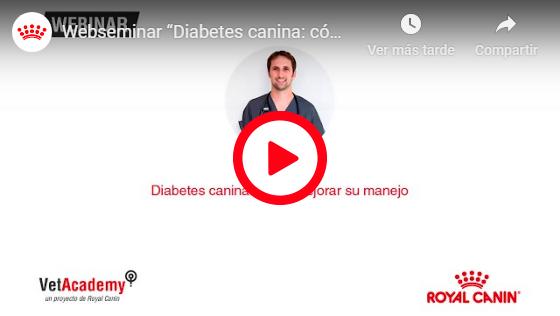 DIABETES CANINA: CÓMO MEJORAR SU MANEJO