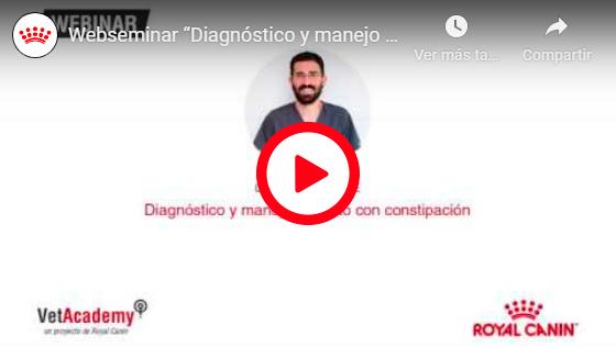 DIAGNÓSTICO Y MANEJO DEL GATO CON CONSTIPACIÓN