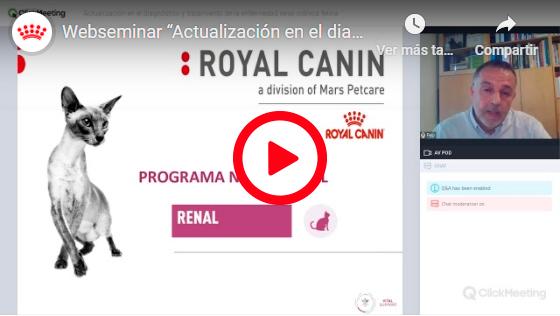 ACTUALIZACIÓN EN EL DIAGNÓSTICO Y TRATAMIENTO DE LA ENFERMEDAD RENAL CRÓNICA FELINA