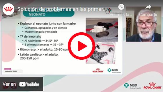 SOLUCIÓN DE PROBLEMAS EN LAS PRIMERAS SEMANAS DE VIDA DEL CACHORRO
