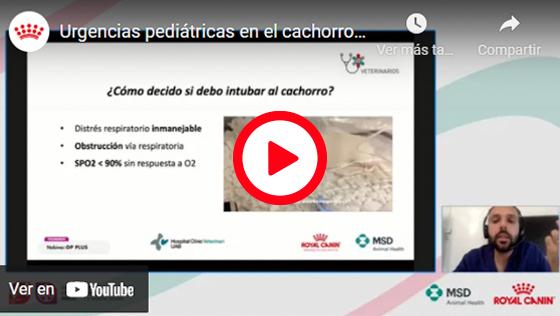 URGENCIAS PEDIÁTRICAS EN EL CACHORRO: ¿ESTOY PREPARADO PARA ELLAS?