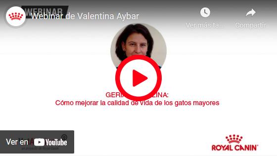 GERIATRÍA FELINA: CÓMO MEJORAR LA CALIDAD DE VIDA DE LOS GATOS GERIÁTIRCOS